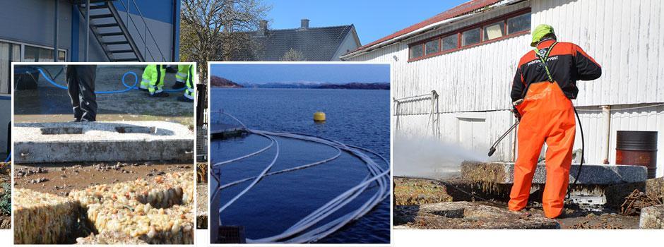 Nilfisk rengjøringsløsning til havbruk