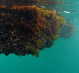 Vasking under vann